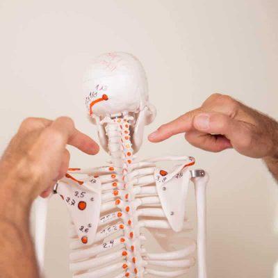 lnb skelett